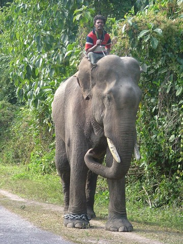 Qualified Bronze Figur Elefant Massiv Crazy Price Antiquitäten & Kunst